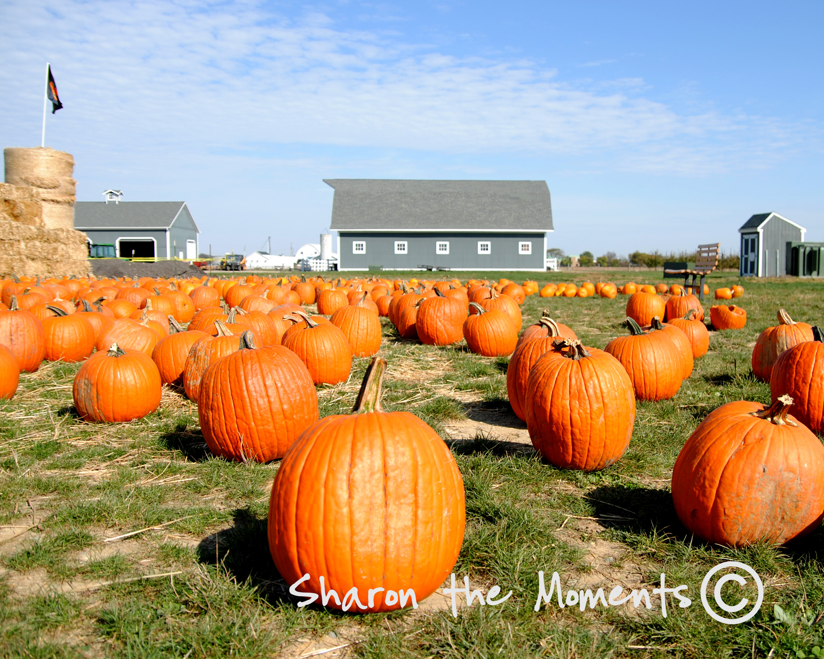 Pumpkins, Pumpkin Patch and Fall Folage