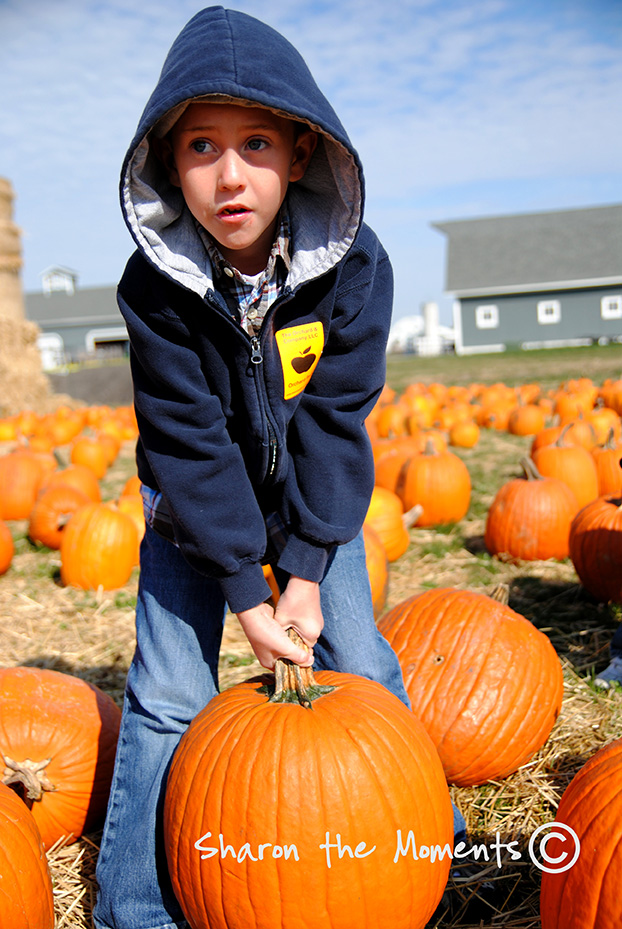 Pumpkin Patch at Orchard and Company|Sharon the Moments blog
