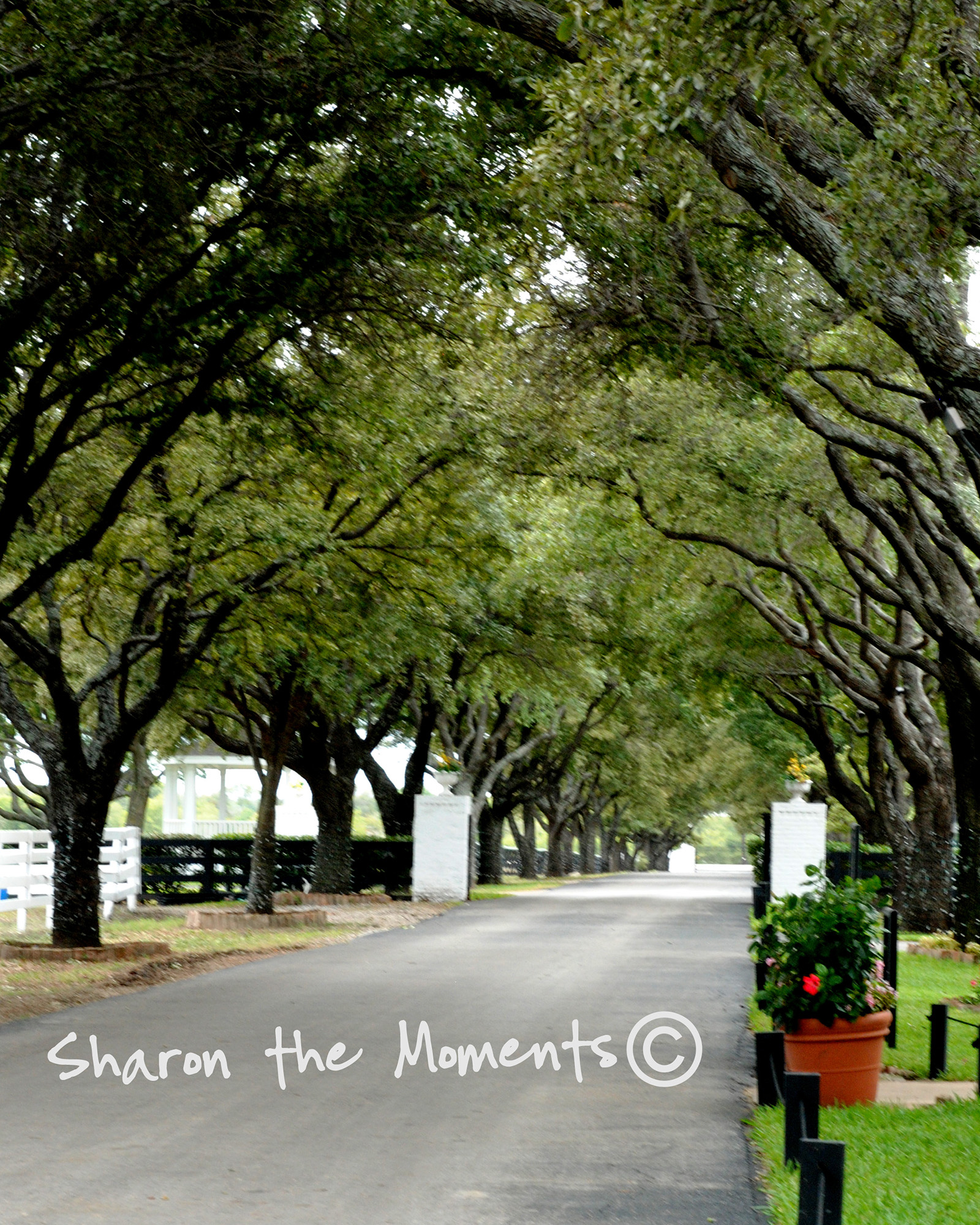 I Heart Faces in Dallas Southfork|Sharon the Moments blog