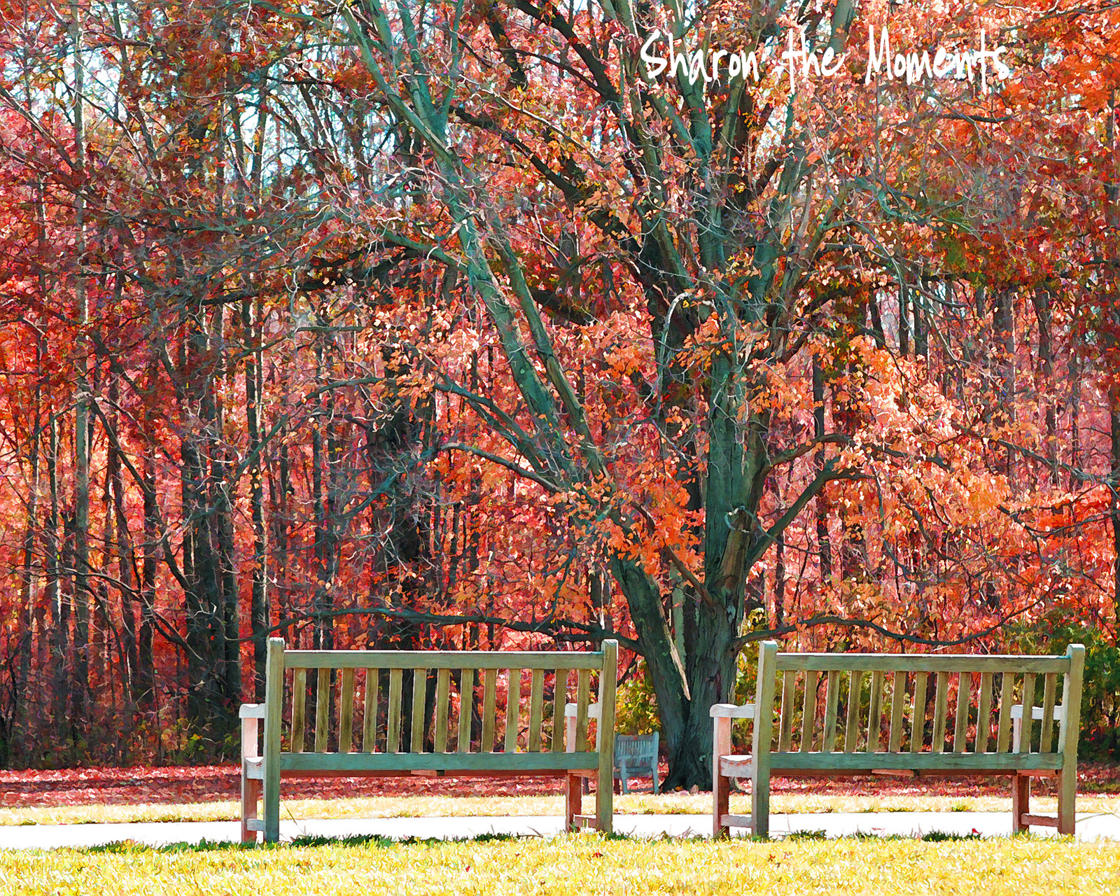Inniswood Metro Gardens bridge autumn color|Sharon the Moments blog