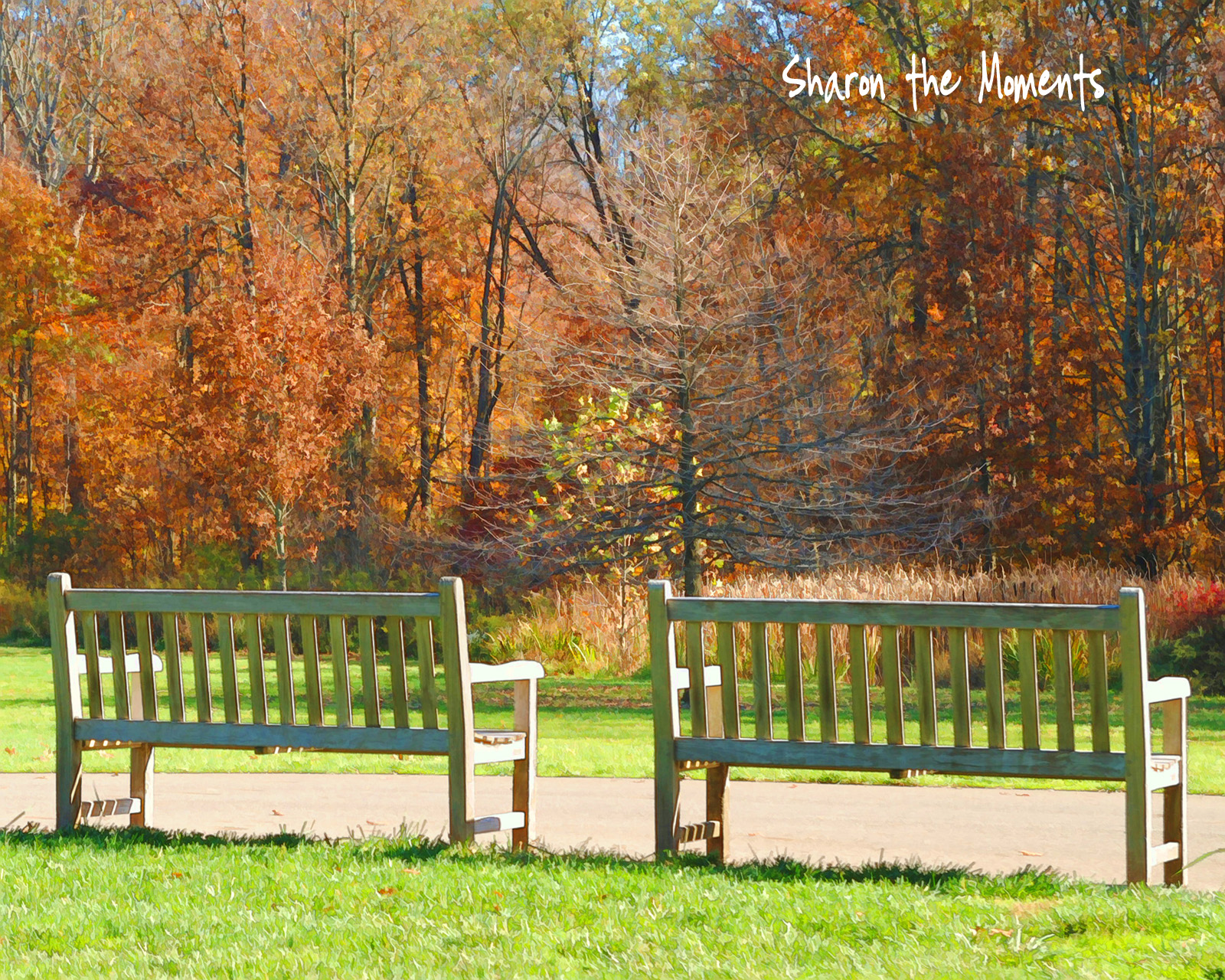 Inniswood Metro Gardens autumn color|Sharon the Moments blog