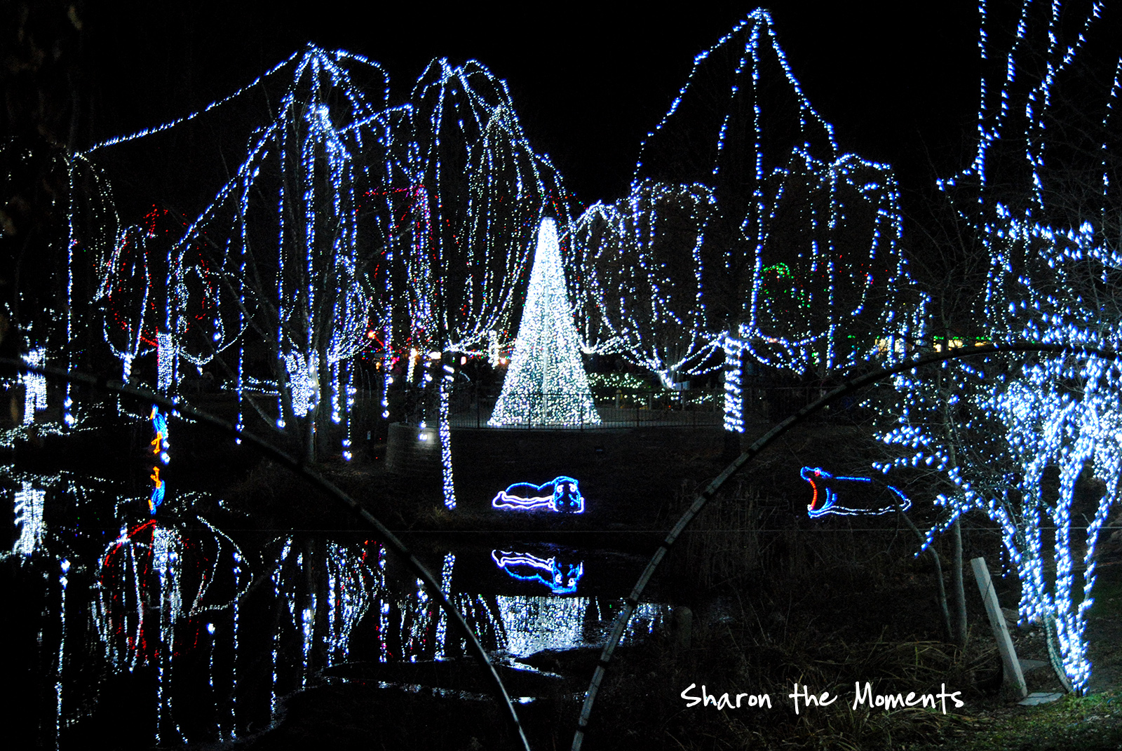 Family Fun at the Columbus Zoo Winter Wildlights|Sharon the Moments blog