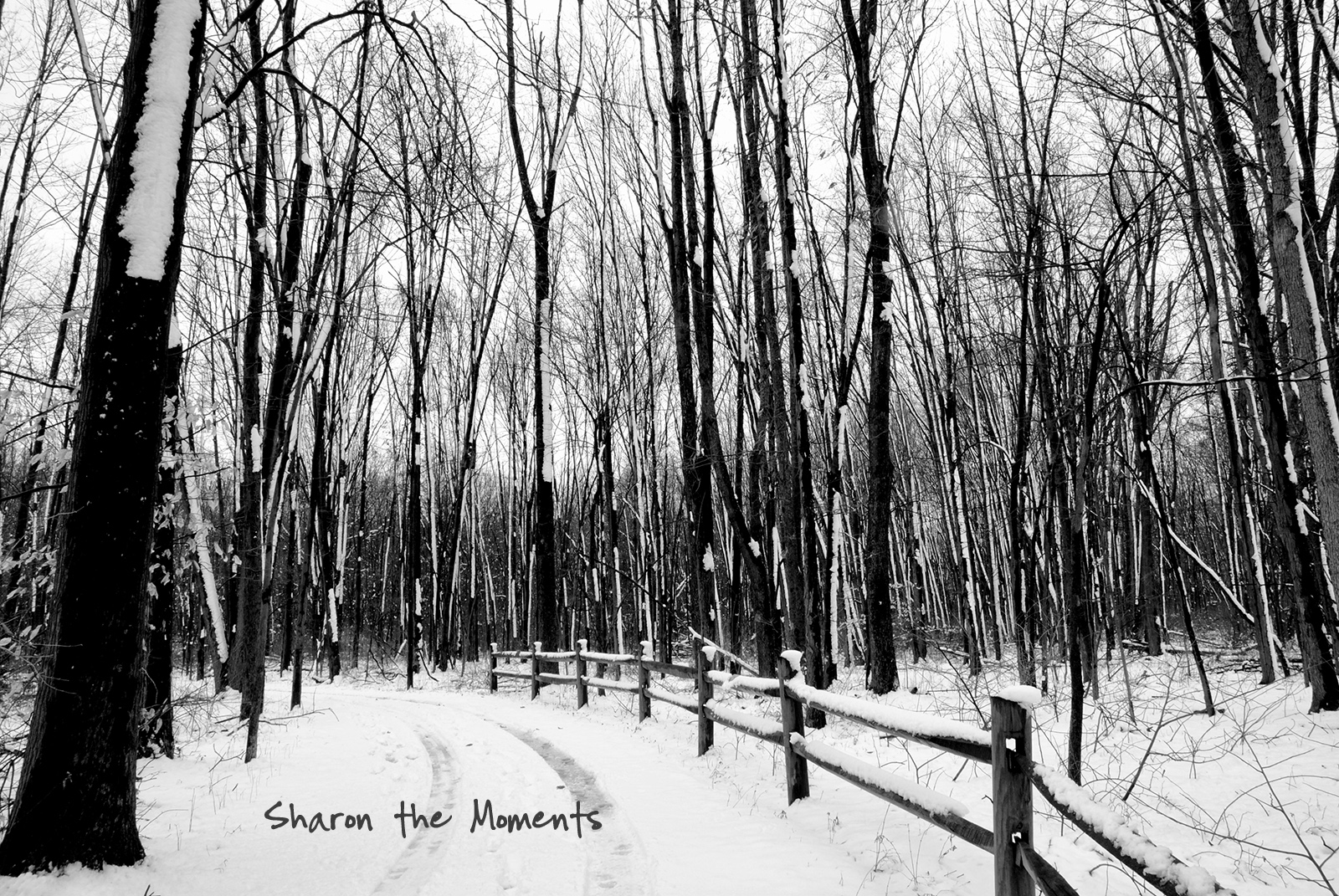 Favorite Photo Friday Snow Day at Sharon Woods and Inniswood Park|Sharon the Moments blog