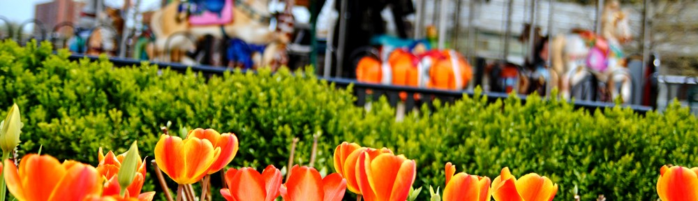 Spring Tulips Columbus Commons Ohio|Sharon the Moments Blog