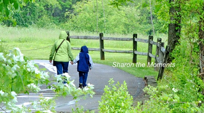 We Geocache. Do You Geocache? |Sharon the Moments Blog
