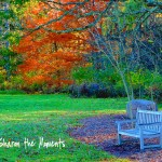 Favorite Photo Friday Autumn|sharon the Moments Blog