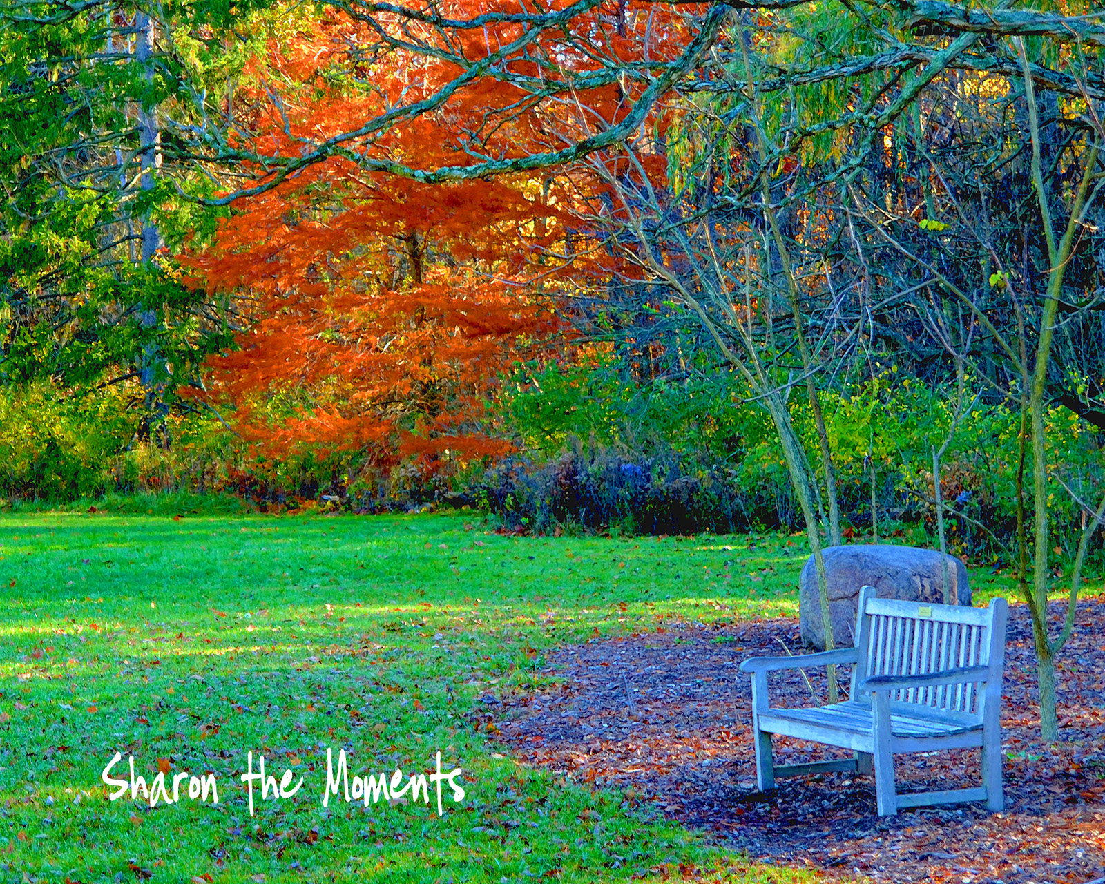 Favorite Photo Friday … Autumn!