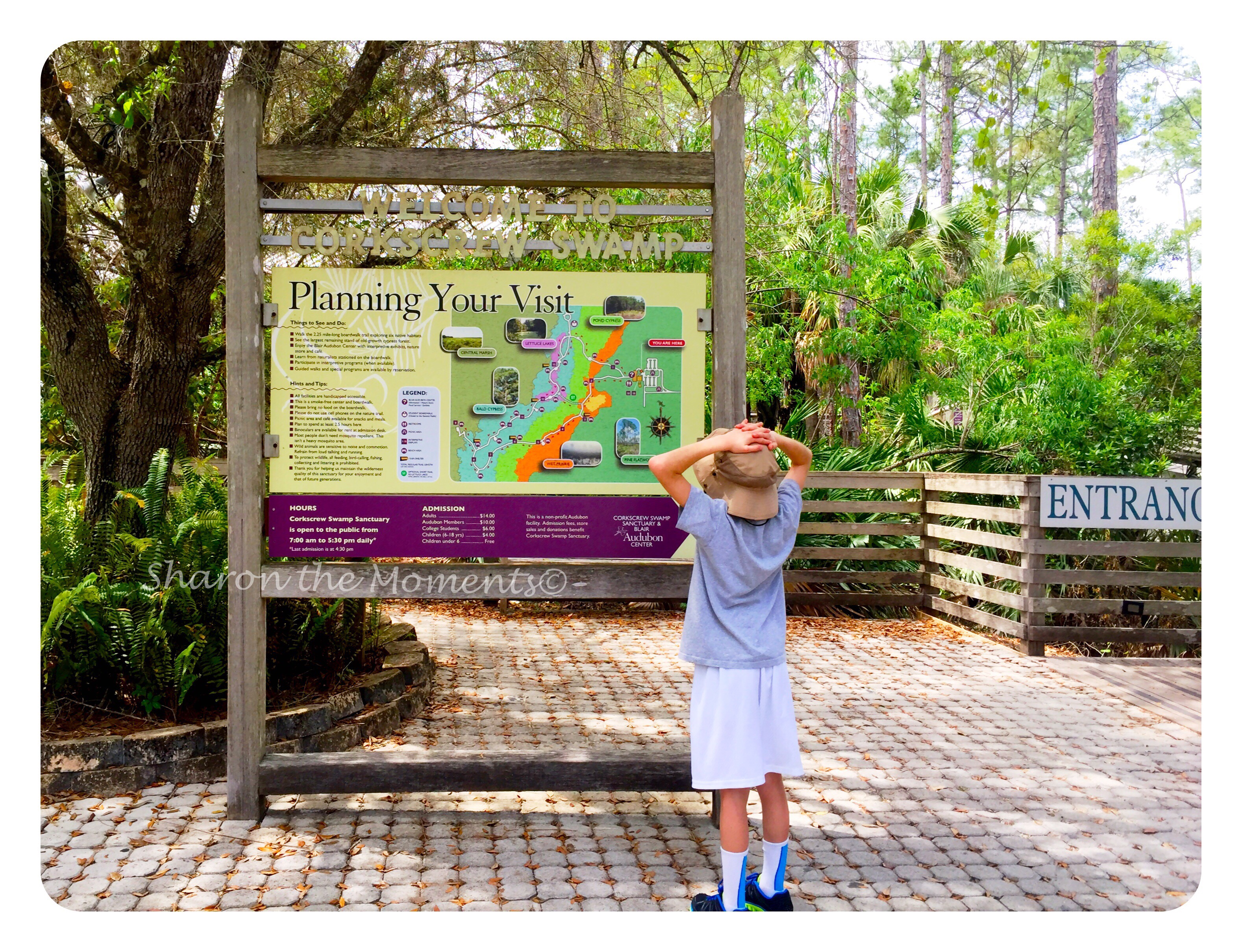 Corkscrew Swamp Sanctuary in SW Florida ||Sharon the Moments Blog