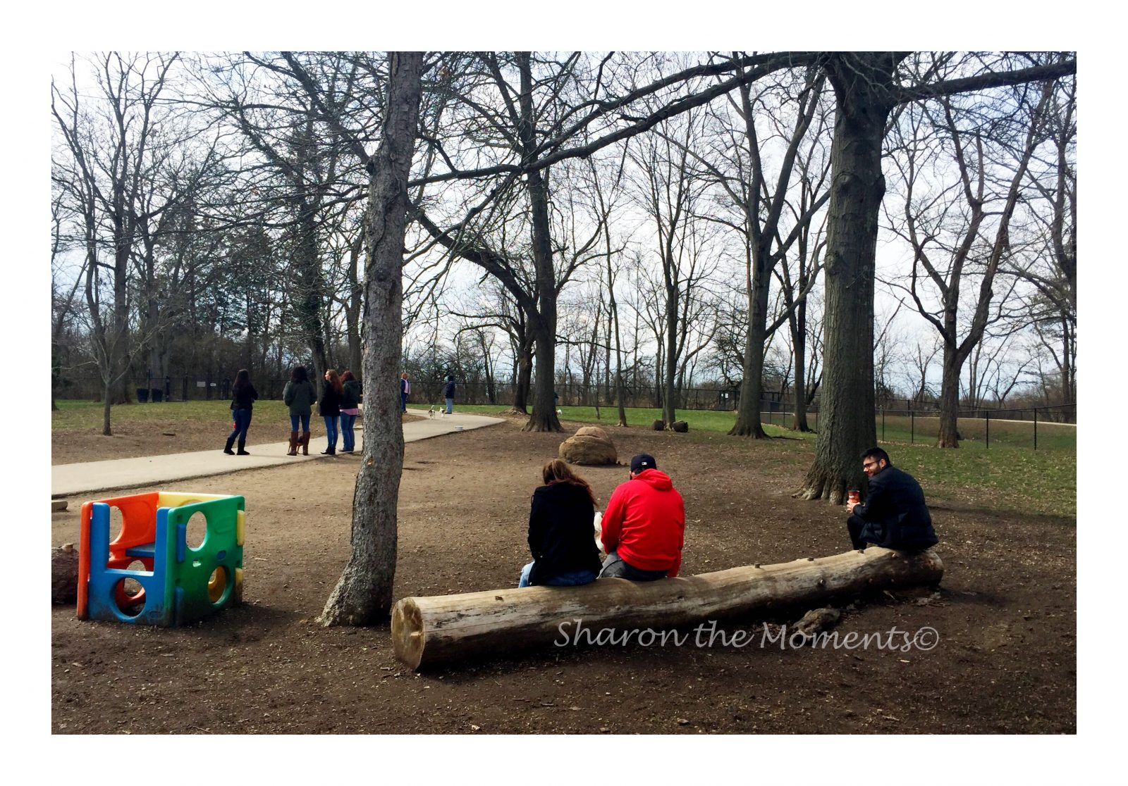 Godown Dog Park
